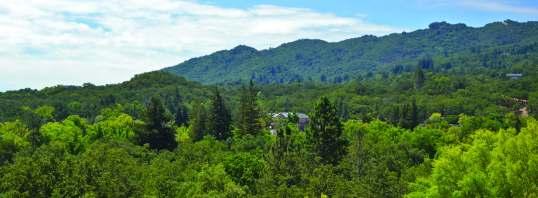 The Sonoma Valley Wildlife Corridor