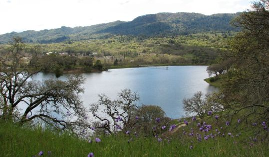 Lake with purple flowers